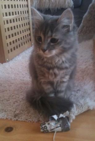 Inger Harriets kattepus, Lucy.